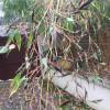 Mes bambous fleurissent – dingue !