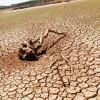 Haïku pour le climat