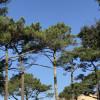 Balade matinale à vélo de la Dune du Pilat à Cazaux par les plages et la forêt