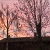 19-12-2020 : soleil levant derrière la maison